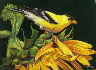 prints of Gold Finch on sunflowers by Mally DeSomma
