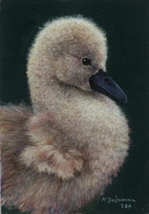 prints of duckling painting by Mally DeSomma